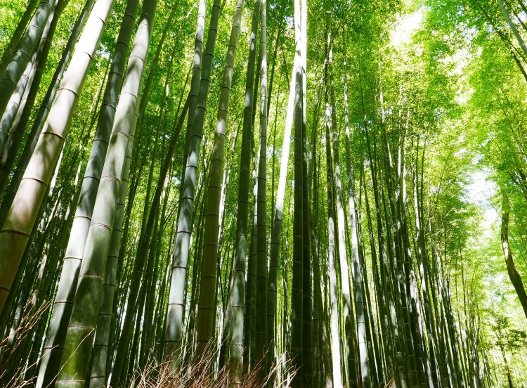 Bamboo: a renewable source of energy for remote communities