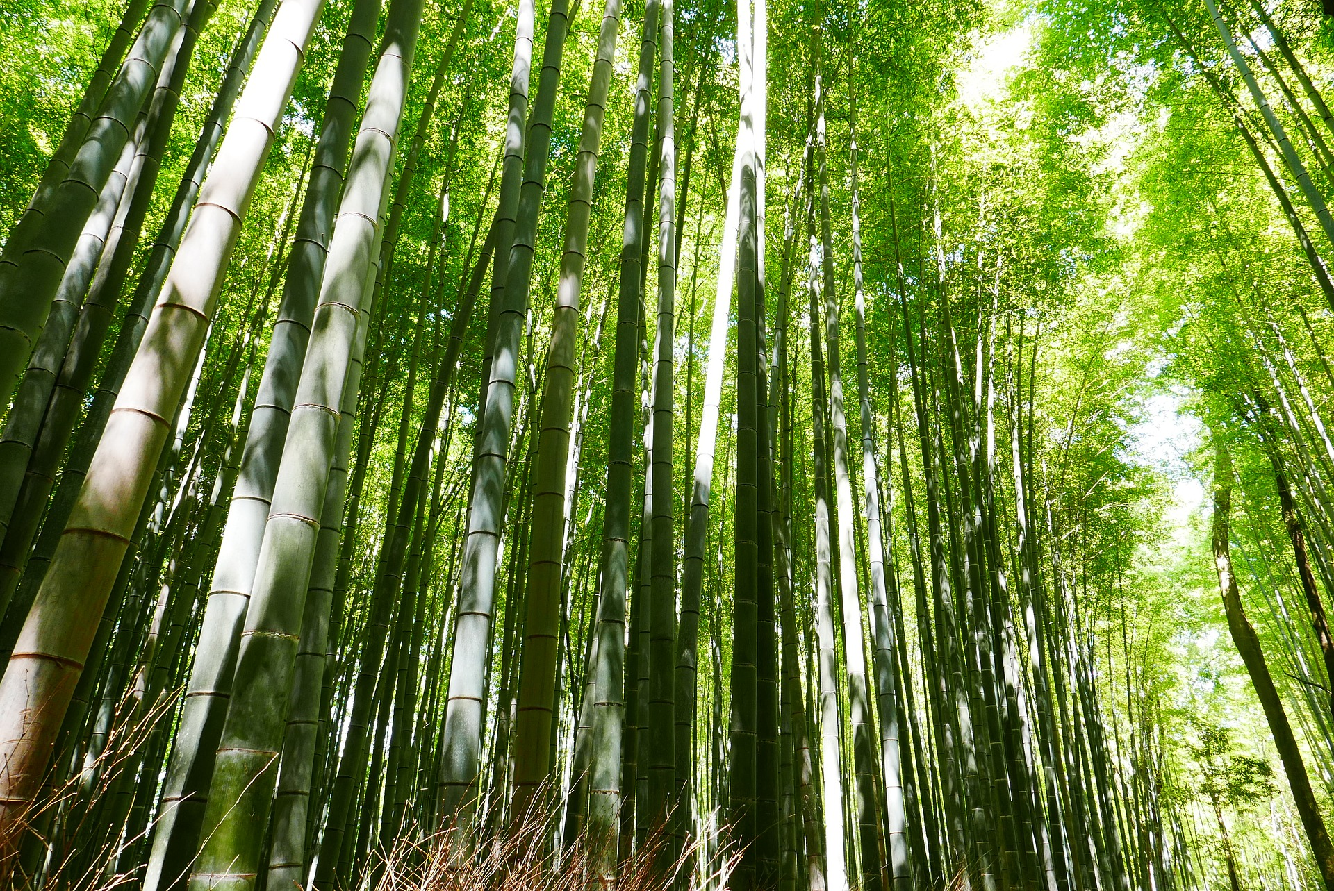 Bamboo - is a raw material of natural origin, has long been used by man in everyday life. More than two centuries ago it was used for the construction of houses, bridges, boats, home paraphernalia, musical instruments. In eastern medicine, the plant was used as a sedative and cosmetic 3