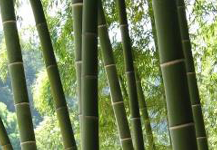 New Global Initiative Helps Countries Harness Bamboo And Rattan Inbar