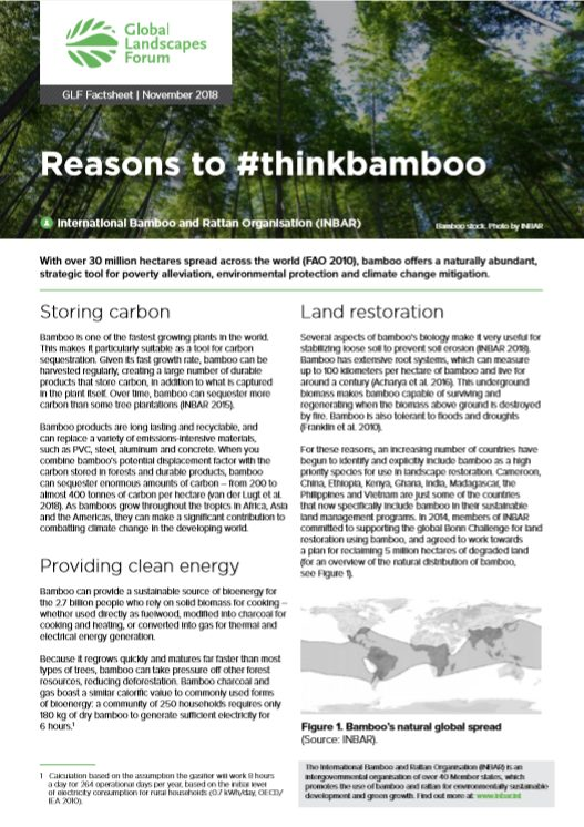 Bamboo for Land Restoration: Fact Sheet