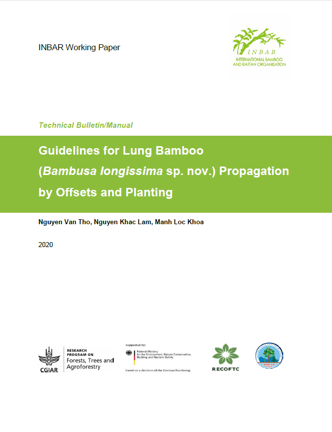 Guidelines for Lung Bamboo (Bambusa longissima sp. nov.) Propagation by Offsets and Planting
